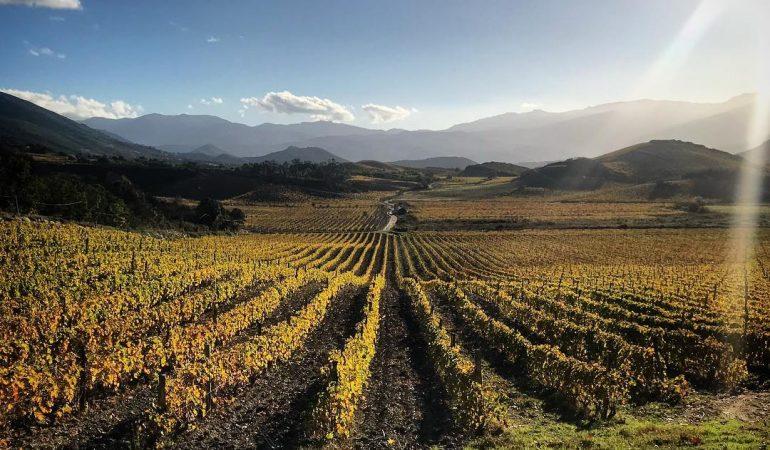 vignoble vin corse