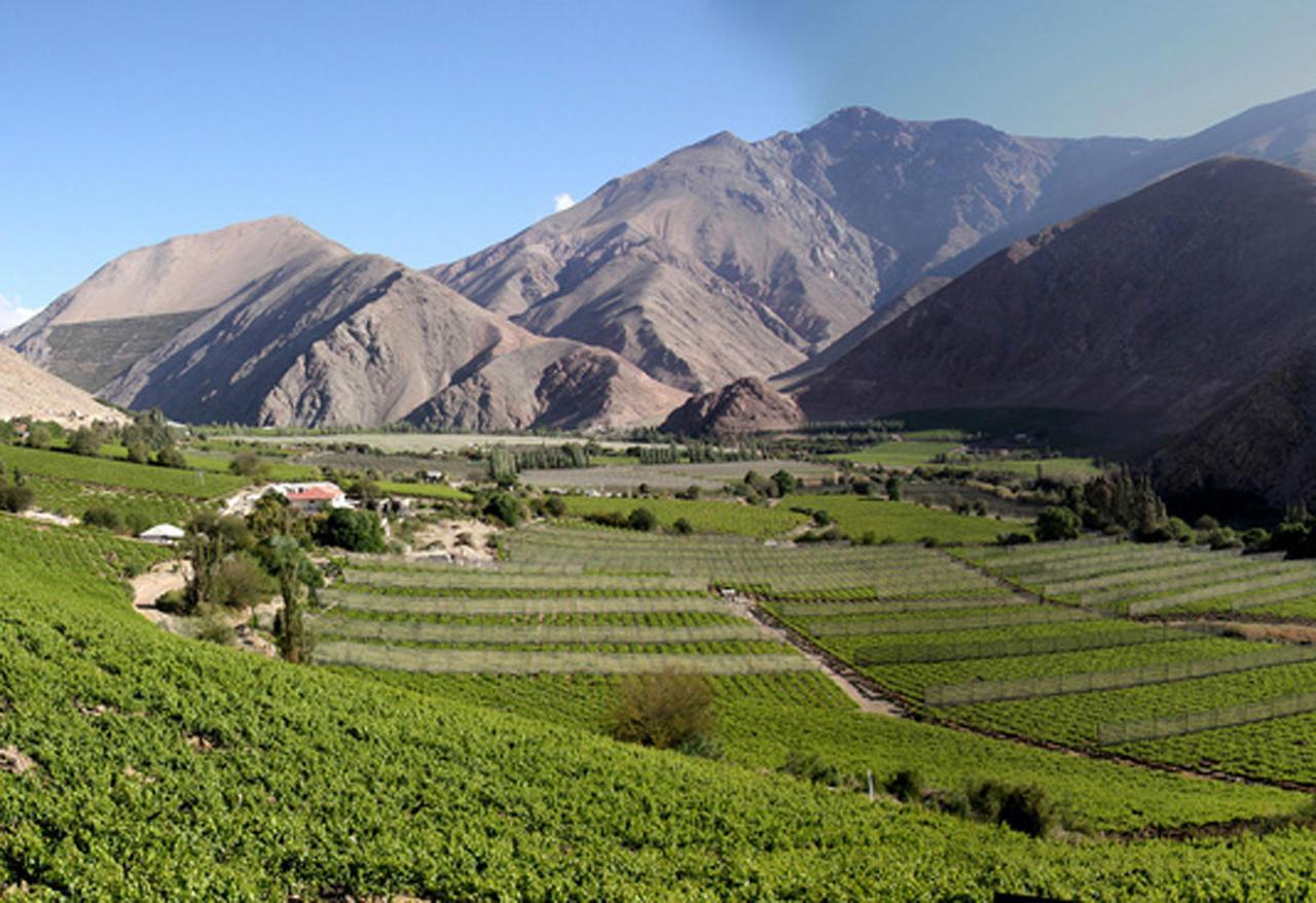 vins-chili