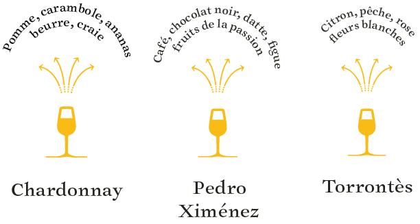 arômes-cépages-blancs-argentine