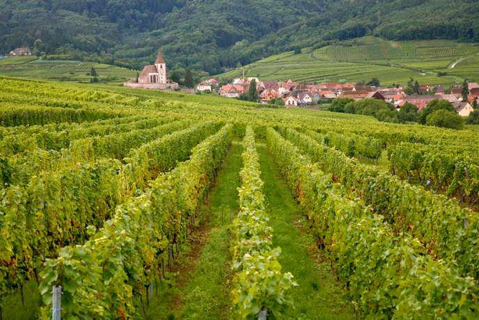 vins-d'alsace