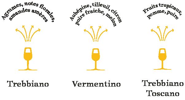 arômes-cépages-blancs-toscane